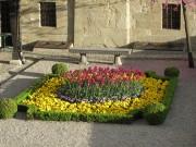 Flowers, Lausanne
