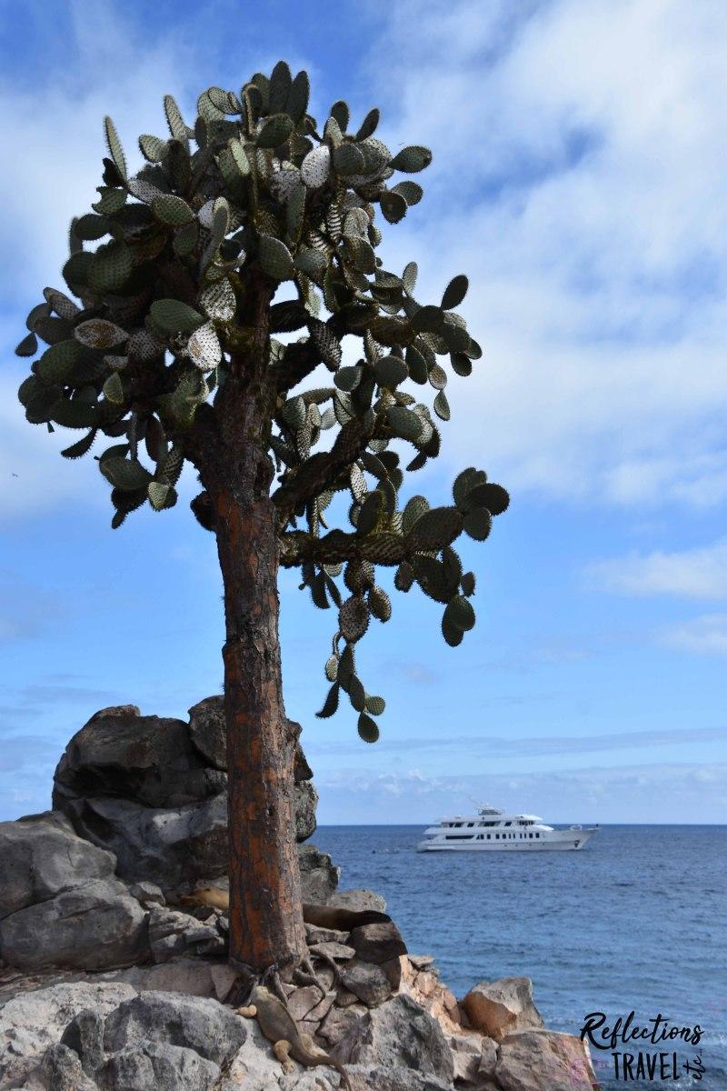 Isla Santa Fé  © Linda Hartskeerl