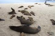 Galapagos sea lions - Puerto Baquerizo Moreno, Isla San Cristobal