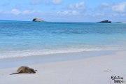Galapagos sea lion -  Bahia Gardner, Isla Espanola © Linda Hartskeerl