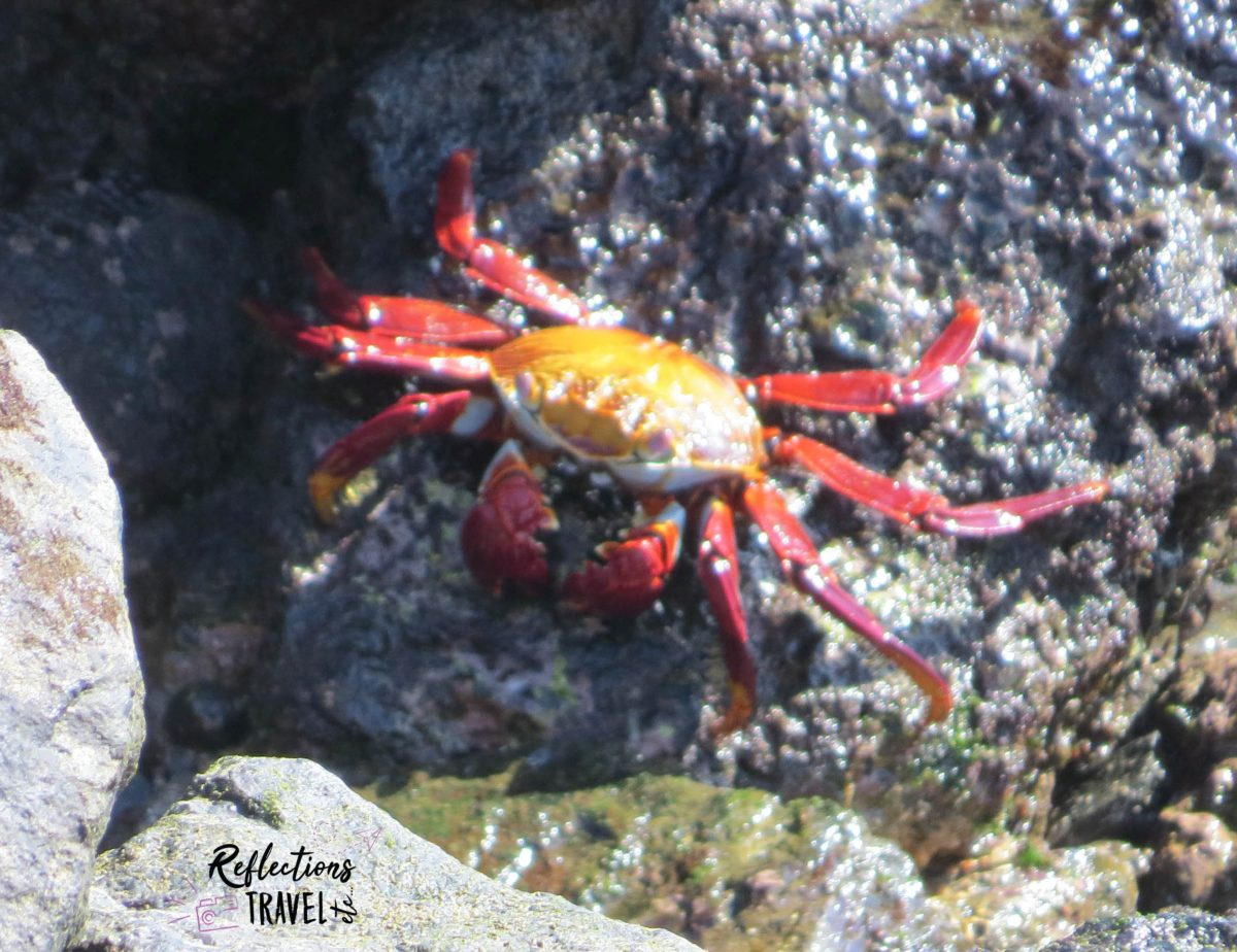 The Journey to the Galapagos Islands